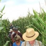 farm tour cornfield