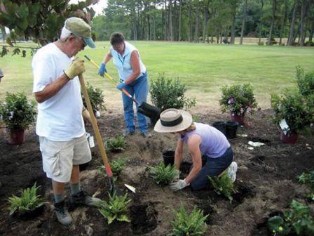 rain garden planting 1